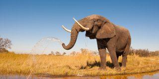 El elefante 'socorrista' salva a su cuidador de morir ahogado en un río
