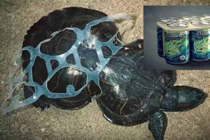 Una cervecera crea anillos para sus Six Packs que en lugar de matar a las tortugas, les sirve de comida