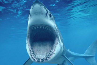 Vídeo: Un enorme tiburón blanco roba la carnada de un pescador en Nueva Jersey