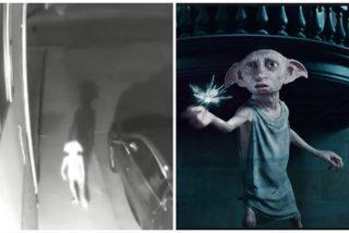 Captan en vídeo a una extraña criatura idéntica a Dobby, el elfo de Harry Potter