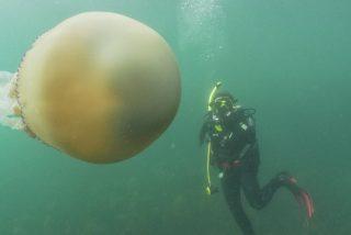 El peligroso encuentro entre unos buzos y una medusa gigante