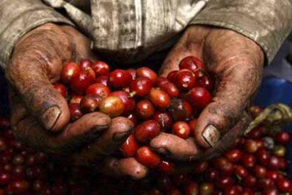 Qué es la crisis mundial del café y cómo te afecta estés donde estés
