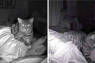Un hombre descubre que su gato lo asfixiaba por las noches gracias a su cámara de seguridad