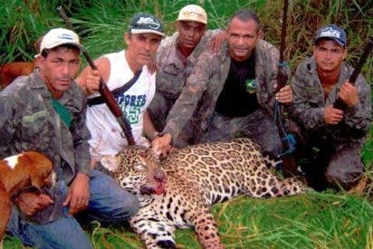 Brasil intenta meter tras rejas al cazador que mató a 1.000 jaguares