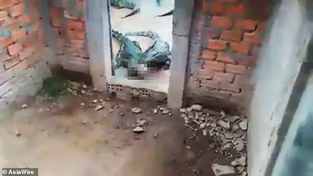Un grupo de cocodrilos se 'merienda' viva a una niña de dos años