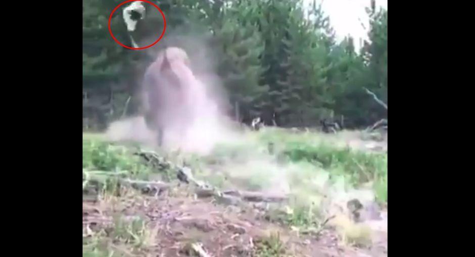 Vídeo: Un bisonte ataca salvajemente a una niña de 9 años