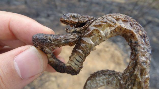 El sufrimiento de los animales por los estragos del incendio en la Amazonía