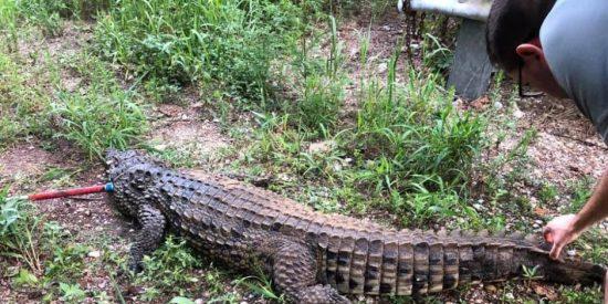Vídeo: El chapuzón de un enorme cocodrilo entre niños que nadaban en un arroyo de Ohio
