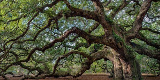 El asombroso lenguaje secreto de los árboles que ha dejado perplejo a los científicos
