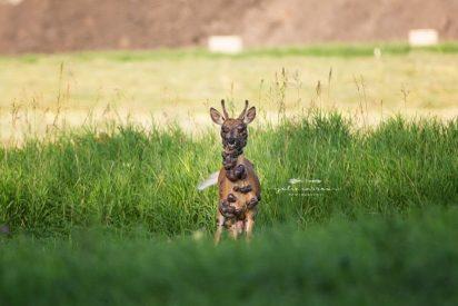 ¿Escapado de Chernóbil?: Las estremecedoras fotografías de un ciervo repleto de tumores
