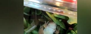 ¿Snack sorpresa?: Familia encuentra una rana viva en el interior de su ensalada