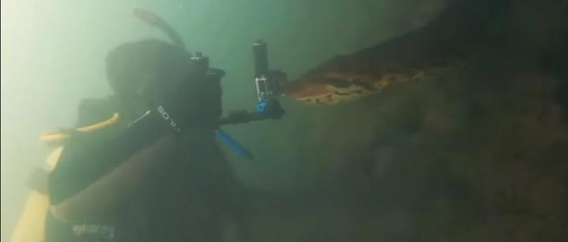 Espeluznante: Dos buzos se encuentran cara a cara con una temible anaconda de 7 metros