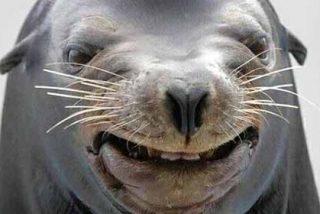 Insólito: Una foca le estropea los planes a una pareja con una tonelada de cocaína en 40 bolsas
