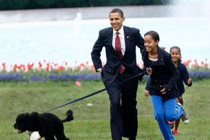 """¿Por qué no recomiendan comprar un Labradoodle"""", la raza de perro 'Frankenstein' que cautivó hasta a Barack Obama"""