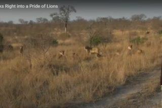Vídeo: Camina directamente hasta una manada de leones en África