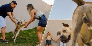 'Por sus huev*s': Un perro arruina la sesión de fotos de unos novios antes de su boda
