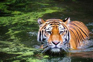 El misterio del sexto sentido de los animales que les permite predecir catástrofes naturales