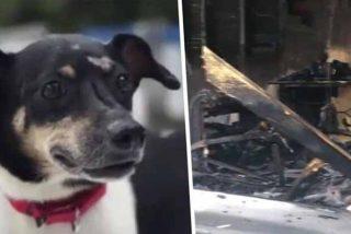 Este perro entregó su vida para salvar a toda su familia de un descomunal incendio