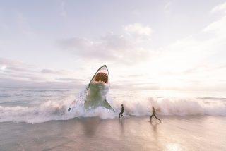 Tiburón: los cinco ataques más aterradores