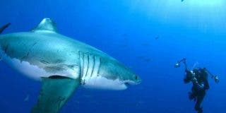 Top 5 de los ataques de tiburón más aterradores de la Historia