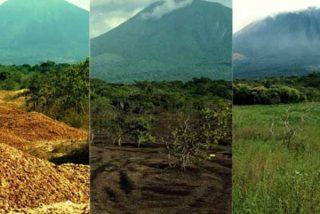 """El """"milagro verde"""" de Costa Rica o cómo 12.000 toneladas de desperdicios pueden revivir a un bosque"""