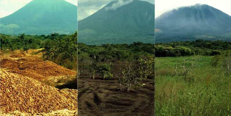 El 'milagro verde' de Costa Rica o cómo 12.000 toneladas de cáscara de naranja reviven un bosque