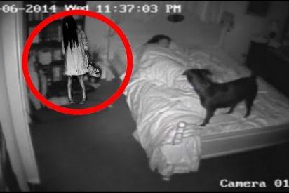Top 5 de perros que vieron fantasmas que sus dueños no pudieron ver