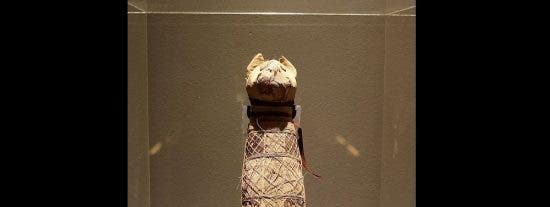 El turbio secreto oculto en una momia de gato con 2.500 años de antigüedad