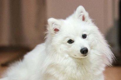Llevó su perro al veterinario porque no ladraba, pero se llevó una gran sorpresa