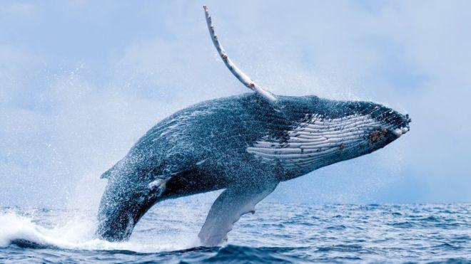 Arqueología: Un extraordinario fósil de Perú revela cómo las ballenas con cuatro patas llegaron a Sudamérica