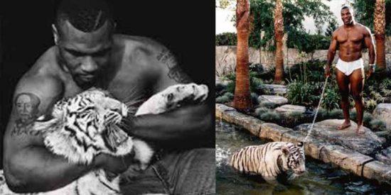 """Mike Tyson confesó la razón por la cual se deshizo de su tigre de bengala: """"Sí, le arrancó el brazo"""""""