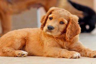 Un descuidado veterinario sacrifica al perro equivocado