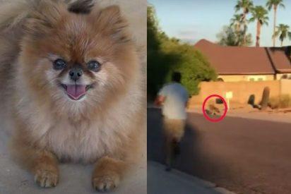 El impresionante rescate de un perrito de las fauces de un coyote