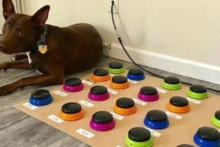 Vídeo viral: Perro conoce hasta 36 palabras para 'hablar' con sus dueños