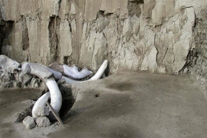 Hallazgo arqueológico: Encuentran 14 mamuts en México y cambia la hipótesis de cómo se cazaba en la prehistoria