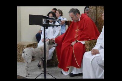 ¿Milagros caninos?: Sacerdote lleva a misa a los perros de la calle para que sean adoptados por los feligreses