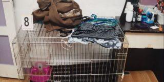 Padres encierran a su hijo en una jaula de mascota y lo queman con agua hirviendo hasta morir