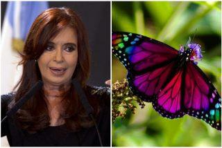 Cristina Fernández vive un episodio paranormal como Maduro: No se le apareció Chávez como un pajarito, sino Néstor Kirchner como mariposa