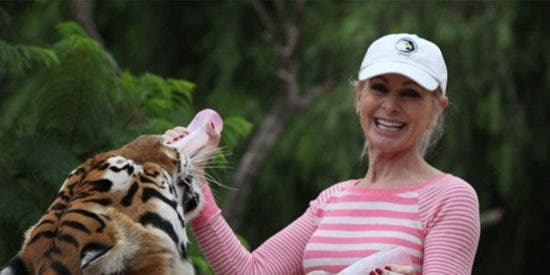 Una pareja de tigres atacan sin piedad a una ecologista