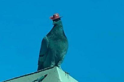 Fotos: Las Vegas se llenan de unas exóticas palomas que usan.... un sombrero de vaquero