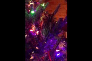 Un búho convierte el árbol de Navidad de una familia en su nuevo hogar
