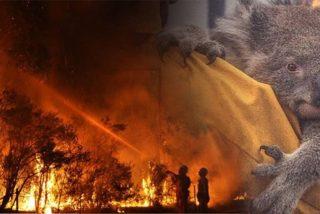 Alarmante: 1.000 millones de animales muertos y algunos al borde de la extinción en Australia