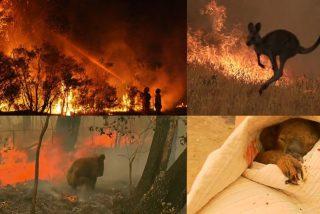 ¿Por qué son tan peligrosos los incendios en Australia?