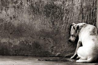 Perros: tienen un grave problema y es en todo el mundo